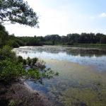 ... an die offene Wasserfäche, auf der eine Vielzahl an Vögeln beobachtet werden können.
